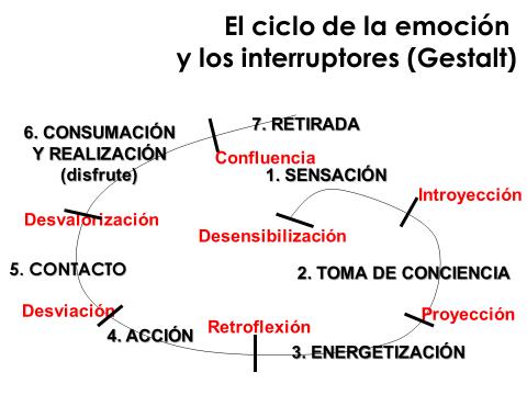 ciclo emocion e interruptores